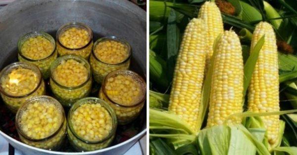 Покупать кукурузу не придется, собственные заготовки быстрее, дешевле, полезнее