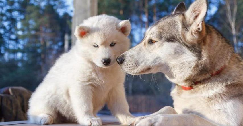 Как приучить собаку к будке — боремся с фобиями